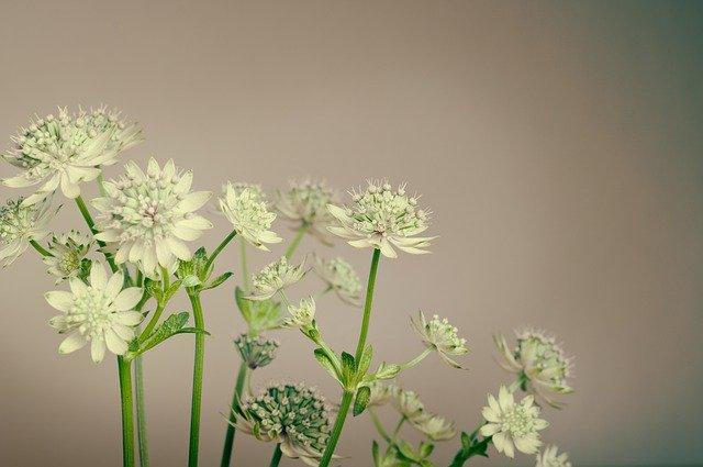 květy rostliny